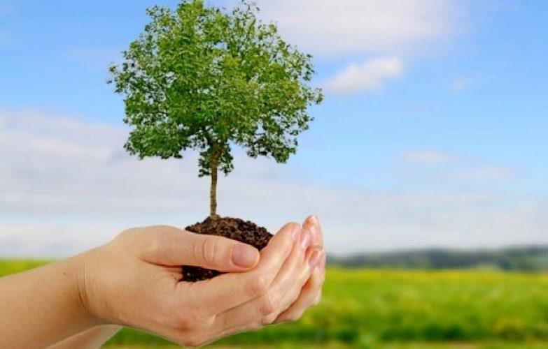 plantar-arbol-medioambiente